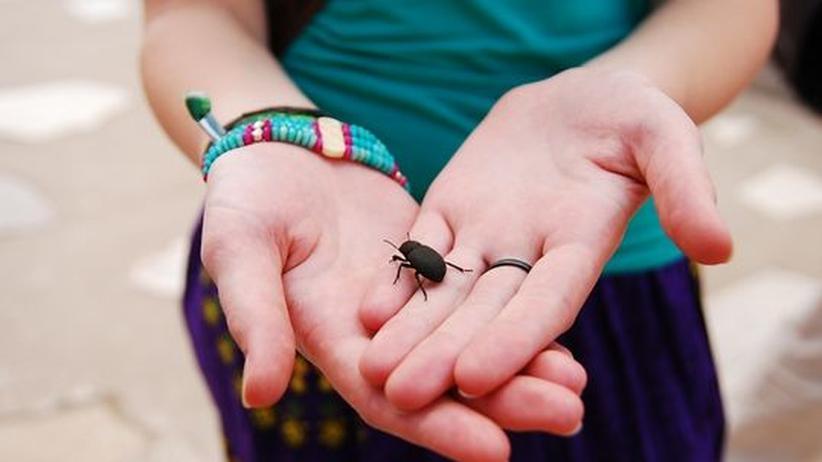 Gutmensch Helfer Käfer guter Mensch Sozialverhalten Hilfe