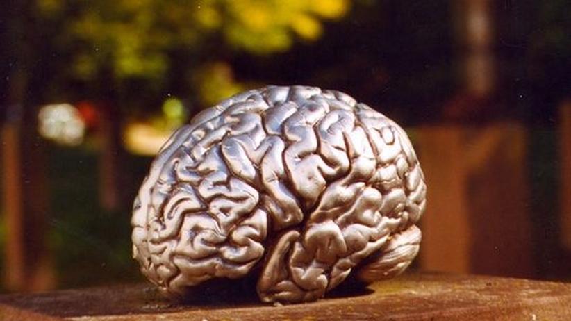Intelligenz: Gehirnjogging per Videospiel ist weitgehend nutzlos