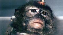 Tierschutz Massentierhaltung Tierversuche Affenversuche Makaken