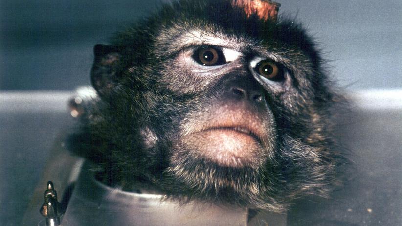 """Bremer Makaken: """"Ich habe mich unter Kontrolle"""""""
