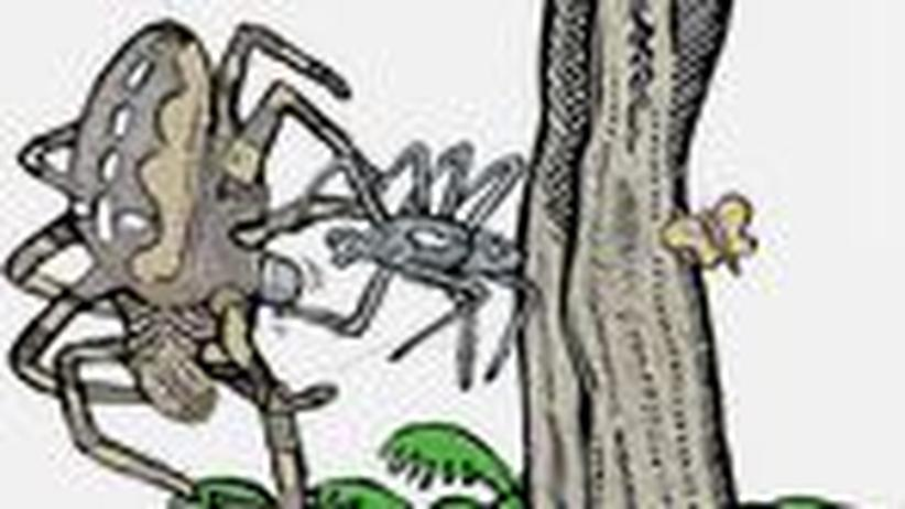 Sexualverhalten: Kamasutra im Tierreich