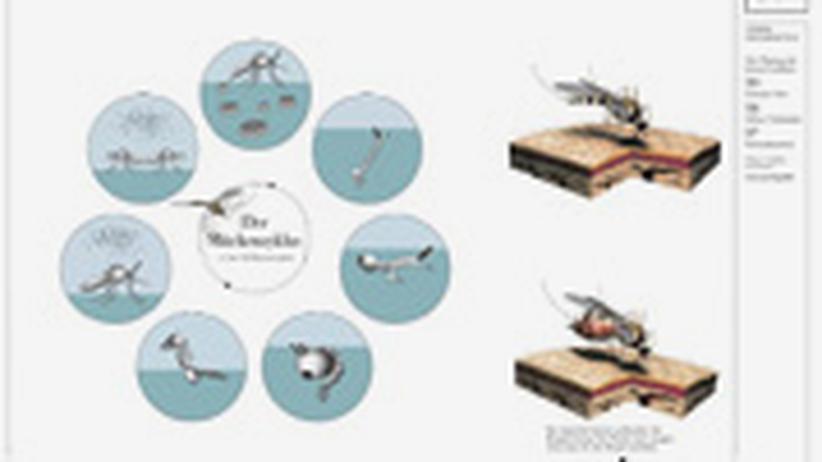 Infografik: Klicken Sie auf das Bild, um die Infografik als PDF-Datei herunterzuladen