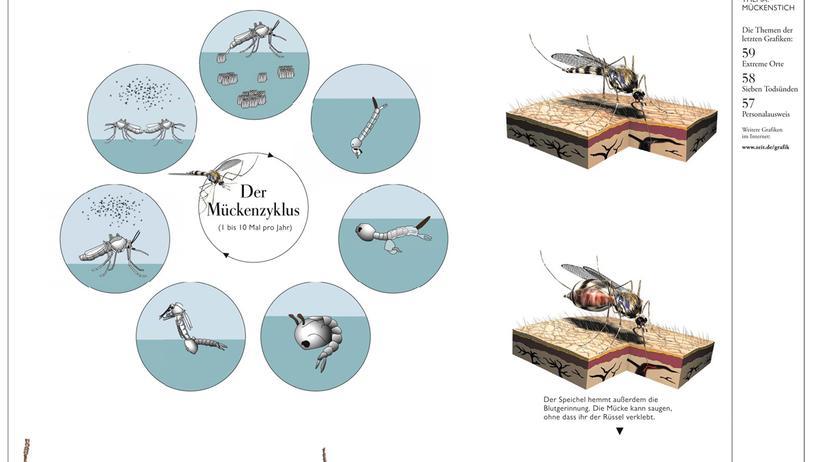 Infografik: Die Mücke, der durstige Plagegeist