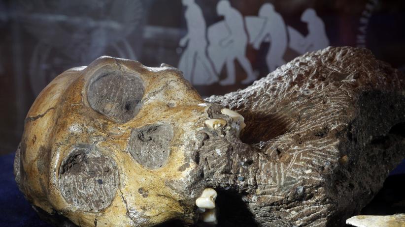 Evolution des Menschen: Die Steinzeit begann vor dem Frühmenschen