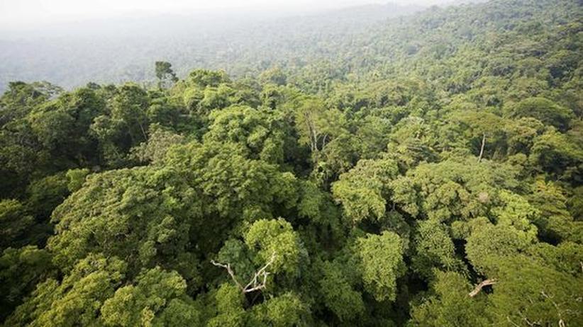 Blick auf den brasilianischen Regenwald
