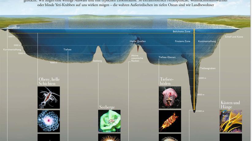 Volkszählung im Meer: Aliens unter uns
