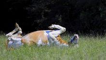 Pferd Schlaf liegend Weide Stimmt's