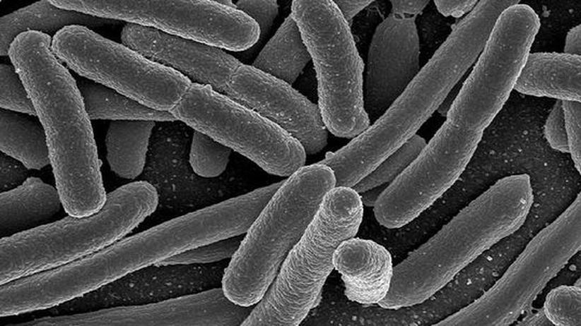 Synthetische Biologie: Wie Forscher eine genetische Firewall errichten