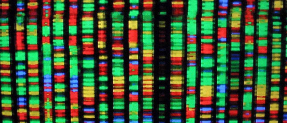 Visualisierung des menschlichen Genoms