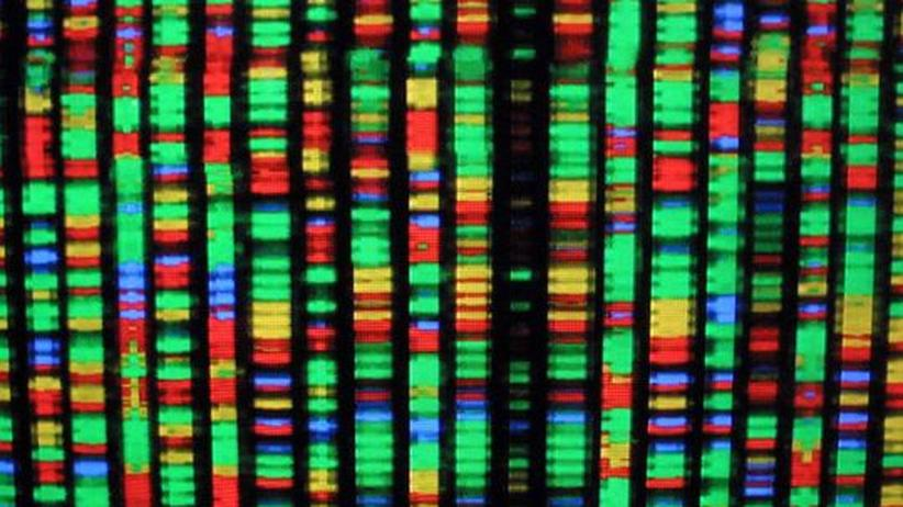 Synthetische Biologie: Wie Forscher den Bausatz des Lebens neu entwerfen