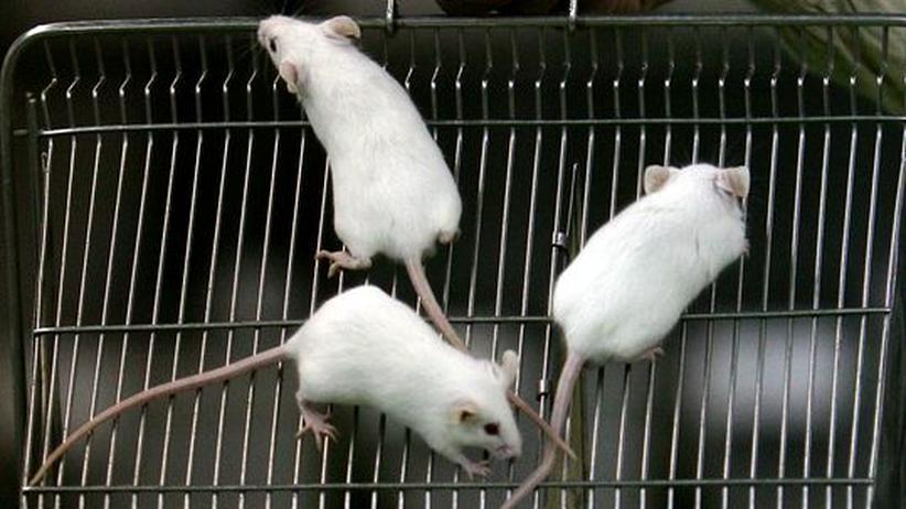 Umfrage: Wie Tierversuchsgegner Forscher ängstigen
