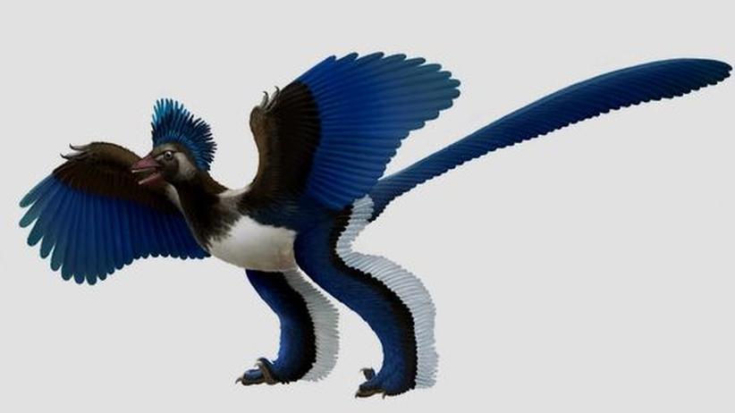 Paläontologie: Archaeopteryx hat aufgehört, ein Vogel zu sein