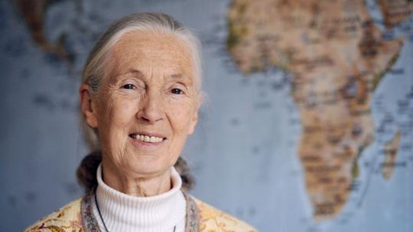 Jane Goodall: Eine Affenliebe