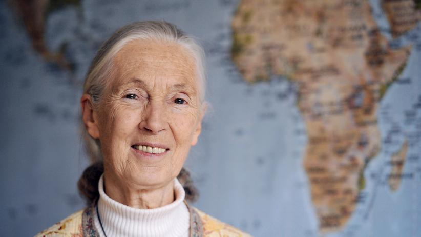 """Jane Goodall: """"Es war auch furchtbar zu sehen, wie ähnlich Affen uns sind"""""""