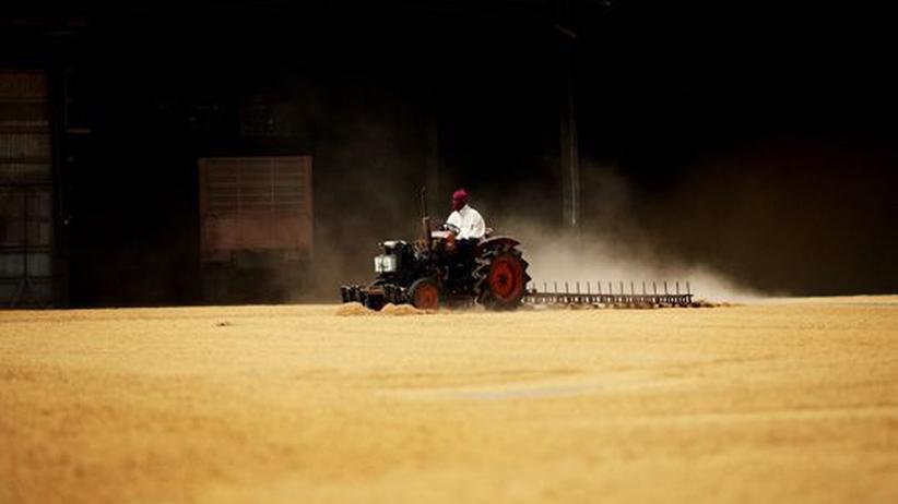Nachhaltige Landwirtschaft: Ein Arbeiter fährt mit dem Traktor durch eine Reismühle.