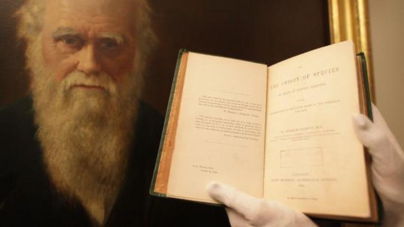 Darwin und Wallace: Jene eine Stunde im Hafen