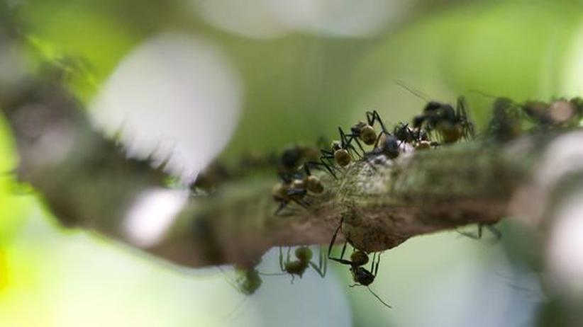 Verkehrspsychologie: Staus vermeiden wie die Ameisen