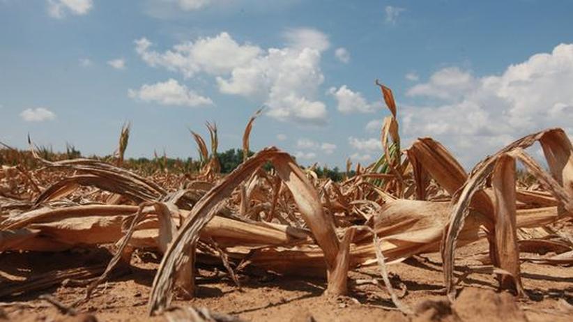Naturkatastrophe: Dürre in den USA könnte bis zum Herbst andauern