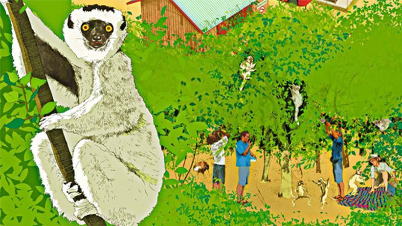 Wissen in Bildern: Das perfekte Dschungelcamp