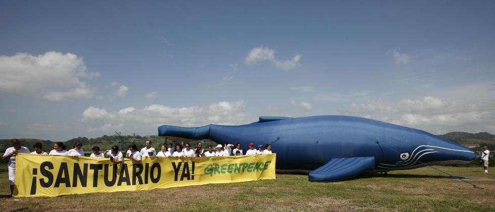 Umweltschutzorganisationen protestieren in Panama gegen das Töten von Walen.