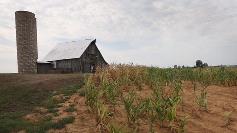 Agrarkraftstoffe: Hungertreiber Biosprit