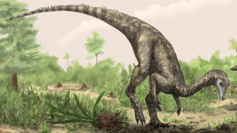 Knochenanalyse: Verstaubtes Skelett entpuppt sich als ältester Dino-Fund