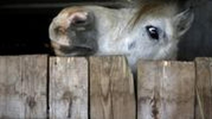 Pferd Osteuropa Stall Pferdefleisch