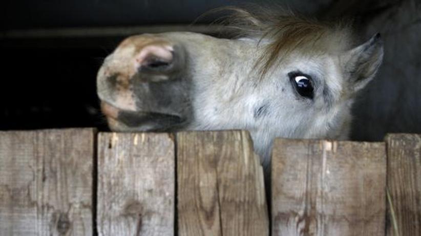 Etiketten-Schwindel: Alles Wichtige zum Pferdefleisch-Betrug