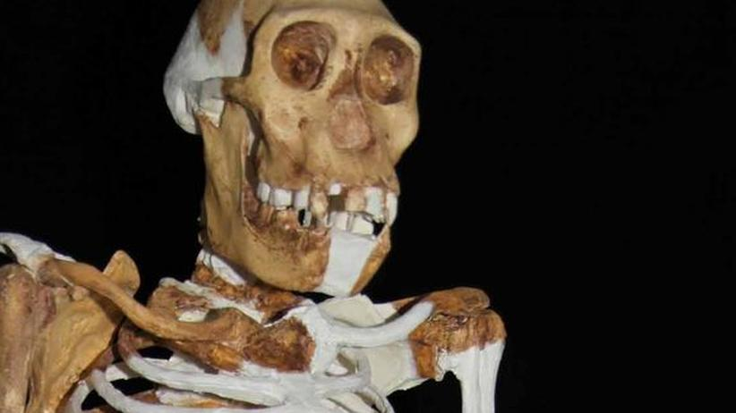 Skelett des Australopithecus sediba