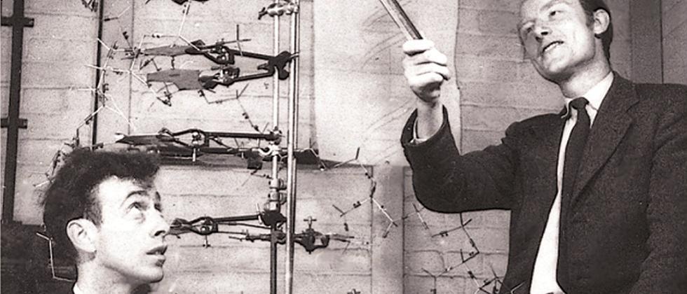 Francis Crick (rechts) und James Watson 1953 mit ihrem Modell der DNA-Struktur.