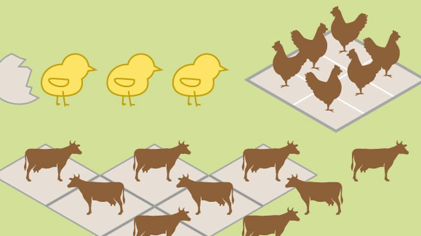 Themenwoche Vegan: So viele Tiere verbrauchen wir