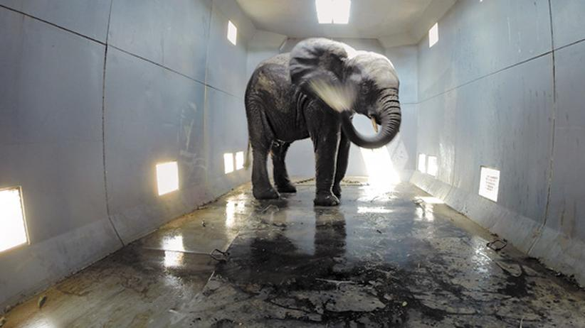 Artenschutz: Die Kunst, einen Elefanten zu fangen