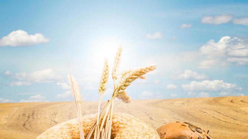 Ernährung: Ein Ratgeber, dümmer als Brot