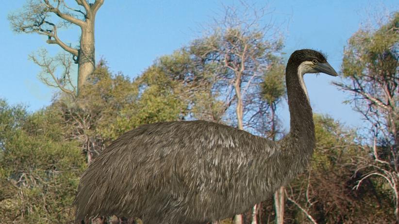 Evolution: Die Urahnen der Laufvögel hoben noch ab