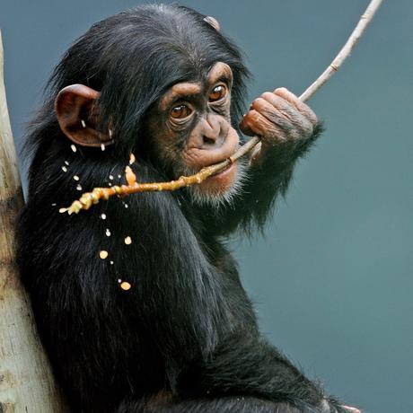 Tierrechte: Schaut hin!