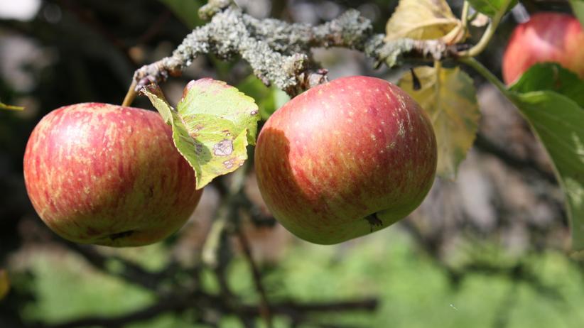 Obst: Haben süße Äpfel mehr Kalorien als saure?