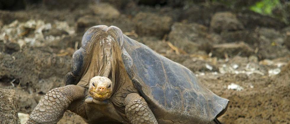 Alte Tiere: Wenn die Flosse schmerzt und die Pfote knackt