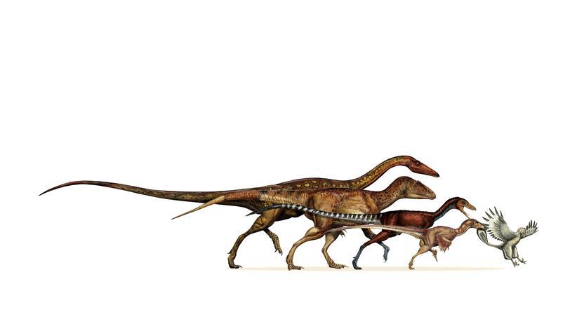 Evolution: Wie rasant Dinos zu Vögeln schrumpften