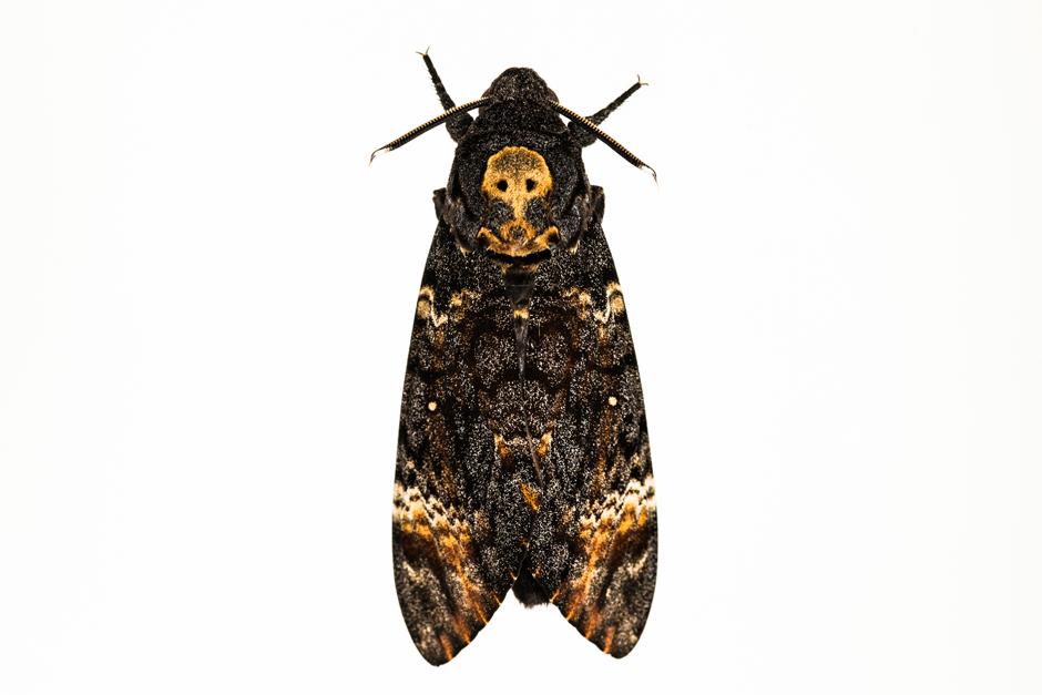 fotos von insekten motten party seite 7 wissen zeit online. Black Bedroom Furniture Sets. Home Design Ideas