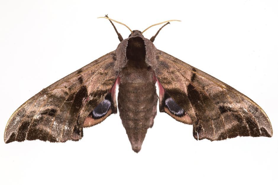 Fotos Von Insekten Motten Party Zeit Online