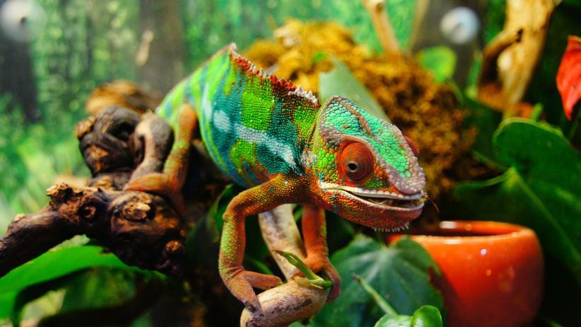 Authentizität: Das Ich ist ein Chamäleon