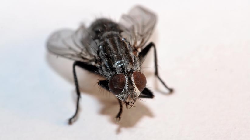 Insekten: Kreisen Fliegen auch um die ausgeschaltete Deckenlampe?