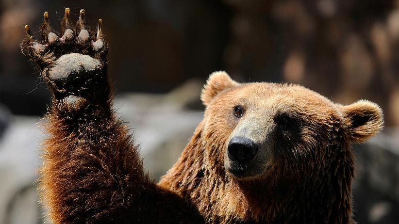 Artenschutz: Wenn der Grizzly kommt, mit Pfefferspray auf seine Füße zielen