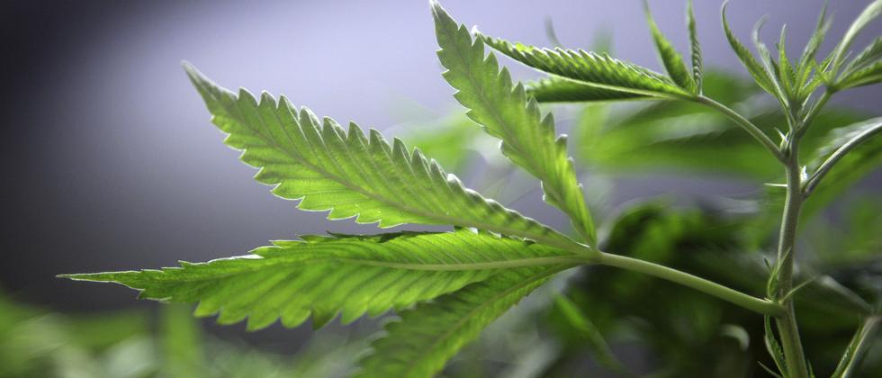 """Legalisierung von Cannabis: """"Kiffer sind keine Kriminellen"""""""
