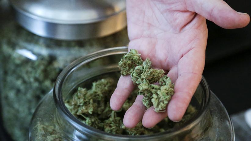 Marihuana: Die seltsame Verfolgung der nüchternen Kiffer