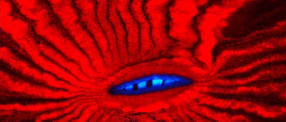 Fluoreszens Mikroskopie Koralle Technik Nobelpreis