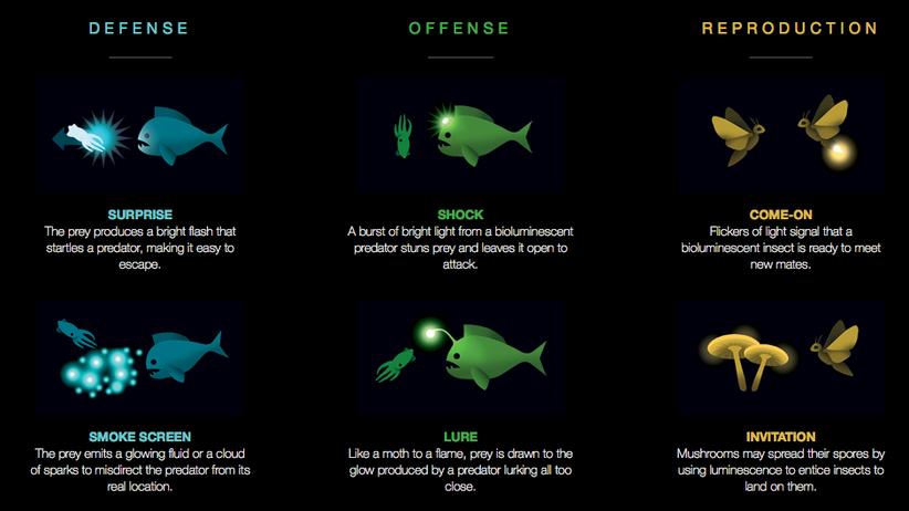 Biolumineszenz: Bling-Bling zum Überleben
