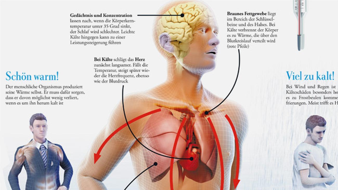 Erfreut Menschlicher Körper Herz Ideen - Anatomie Ideen - finotti.info