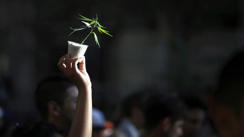 Legalisierung: Wissen, Legalisierung, Bündnis 90/Die Grünen, Marihuana, Cannabis, Drogenpolitik, Haschisch, Drogenkonsum, Alkohol, Erwachsene, Jugendliche, Studie, Verbraucherschutz, USA
