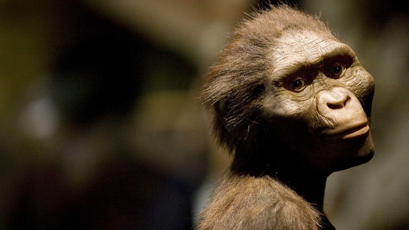 Evolution: Wissen, Evolution, Evolution, Paläoanthropologie, Neandertaler, Frühmensch, Australopithecus, Archäologie, Anthropologie